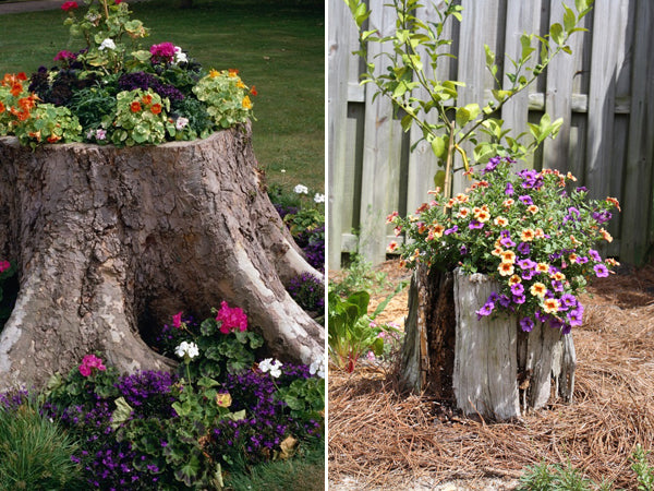 old stump turned into flower bed