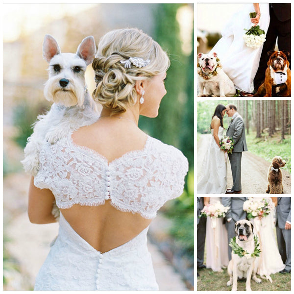 Nine Adorable Ways to Include Pets in Your Wedding