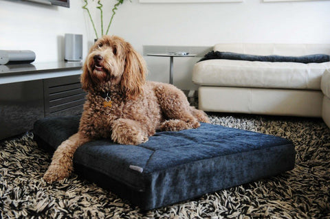 Classic Dog Beds