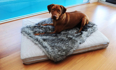 Dog With Beds