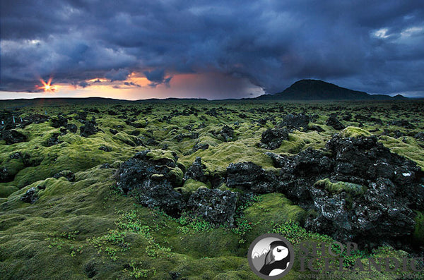 Lava Fields 2 - Fine Print - Shop Icelandic Products