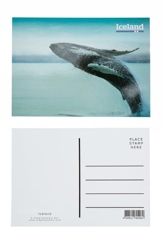 Icelandic sweaters and products - Postcard - Humpback Whale Postcards - Shopicelandic.com