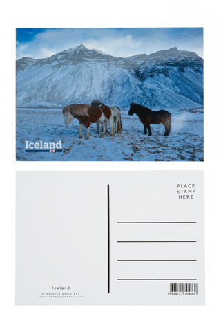 Icelandic sweaters and products - Postcard - Icelandic horses in winter Postcards - Shopicelandic.com