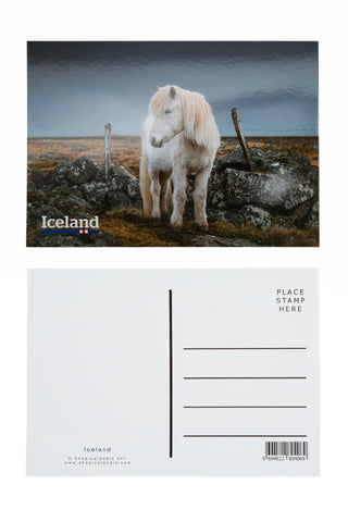 Icelandic sweaters and products - Postcard - Icelandic Horse Postcards - Shopicelandic.com