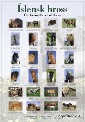 Icelandic sweaters and products - The Iceland Breed of Horses - Poster (S) Poster - Shopicelandic.com