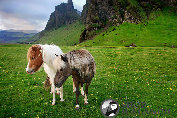 The Icelandic Horse - Fine Print - Shop Icelandic Products