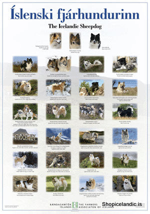 Icelandic sweaters and products - The Icelandic Sheepdog - Poster (L) Poster - Shopicelandic.com
