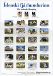 The Icelandic Sheepdog - Poster (S) - Poster - Shop Icelandic Products