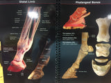 Distal Limb Pocket Guide