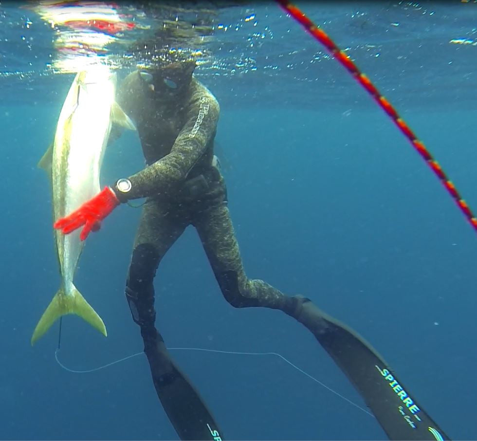 Yellowtail spear fishing mission