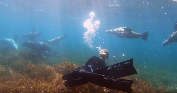 Summer fun and freediving with Sea Lions