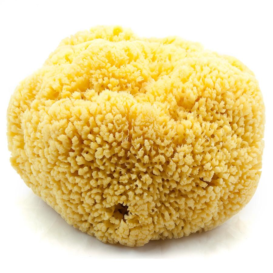 "Natural Yellow Sea Sponge, 9"" Extra Large Sea Sponge Fendrihan"