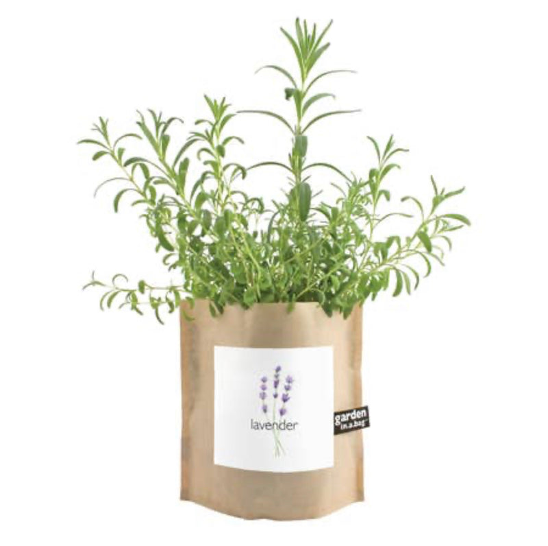 Garden in a Bag - Lavender | Potting Shed Creations $12