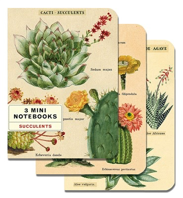 Succulents Mini Notebooks (set of 3)
