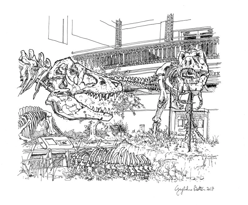 T-Rex at the Carnegie Museum of Natural History Card
