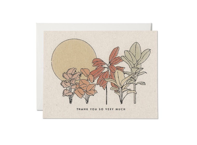 Desert Plants Thank You Boxed Cards
