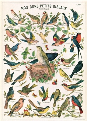 Bird Chart Wrap (Piick Up Only)