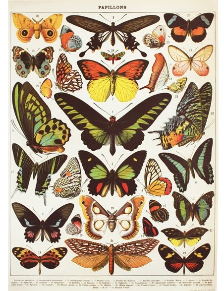Butterflies Chart Wrap (Pick Up Only)