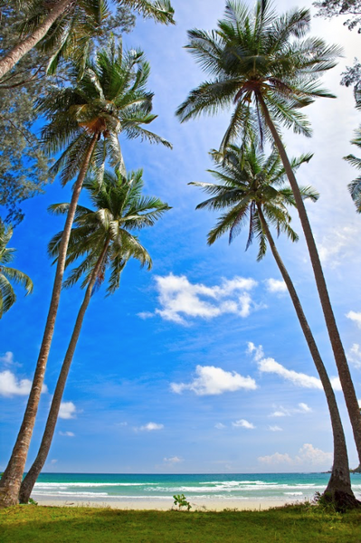 1581 Printed Beach Photo Backdrop with Palm Trees - Backdrop Outlet