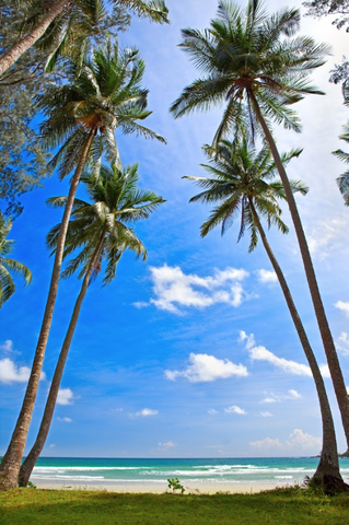 Printed Beach Photo Backdrop with Palm Trees - 1581 - Backdrop Outlet
