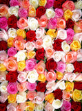 Multiple Colorful Roses Flower Wall Printed Backdrop - 107 - Backdrop Outlet
