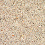 1127 Sand With Shells Backdrop - Backdrop Outlet