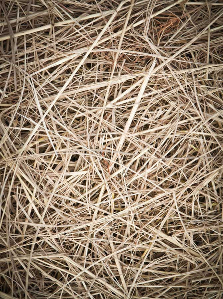 Straw Backdrop - 378 - Backdrop Outlet