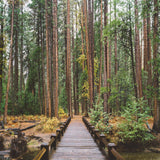 Pier Bridge Tree Forrest Printed Backdrop - 6341 - Backdrop Outlet