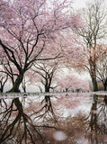 6342 Pink Cherry Blossum Tree Pond Printed Backdrop - Backdrop Outlet