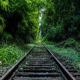 Railroad Tracks Lush Green Forrest Printed Backdrop - 6347 - Backdrop Outlet