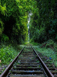 6347 Railroad Tracks Lush Green Forrest Printed Backdrop - Backdrop Outlet