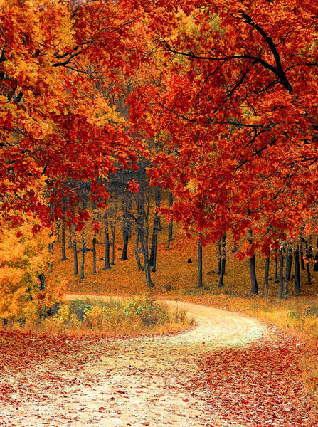 Autumn Driveway Orange Leaves Background Printed Backdrop - 6792 - Backdrop Outlet