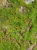680 Green Moss Backdrop - Backdrop Outlet - 3