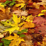 7040 Fall Leaf Backdrop - Backdrop Outlet