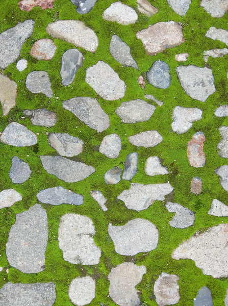 Grass Cobblestone Backdrop - 741 - Backdrop Outlet