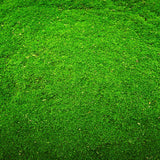 Green Grass Backdrop - 9403 - Backdrop Outlet