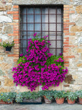 1156 Blooming Floral Window Backdrop - Backdrop Outlet
