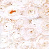 2299 Printed Wall of White Roses Backdrop - Backdrop Outlet