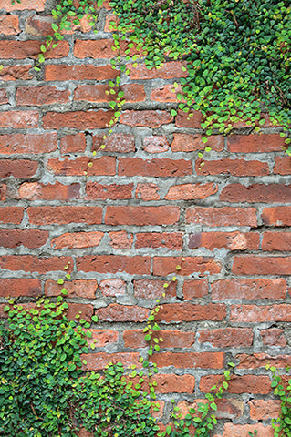 Red Ivy Brick Backdrop - 2847 - Backdrop Outlet