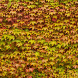 Autumn Fall Leaf wall Backdrop - 3414 - Backdrop Outlet