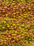 3414 Autumn Fall  Leaf wall Backdrop - Backdrop Outlet