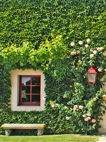 3467 Ivy Window Wall Backdrop - Backdrop Outlet