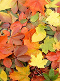 Printed Autumn Leaves Backdrop - 3610 - Backdrop Outlet
