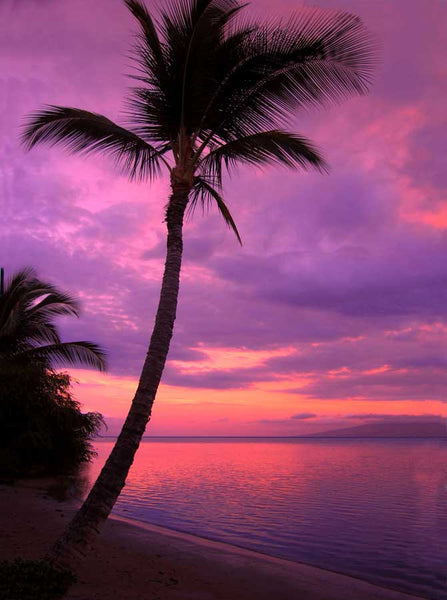 388 Beach Purple Sunset Backdrop - Backdrop Outlet