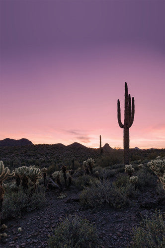 4634 Desert Sunset Cactus Landscape Printed Photography Backdrop - Backdrop Outlet