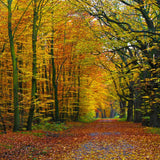 543 Autumn Path Fall Leaf Photo Backdrop - Backdrop Outlet