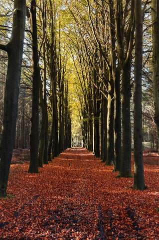 6791 Autumn Forest Walkway Printed Backdrop