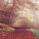 6793 Creepy Foggy Autumn Walkway Printed Backdrop - Backdrop Outlet
