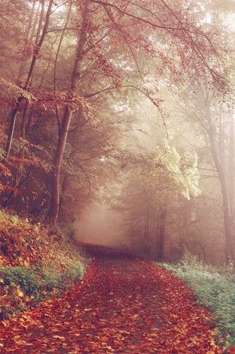6793 Creepy Foggy Autumn Walkway Printed Backdrop