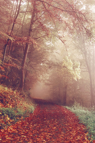 Creepy Foggy Autumn Walkway Printed Backdrop - 6793 - Backdrop Outlet